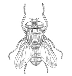 Common housefly outline vector image