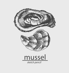Mussel a marine resident sketch style vector