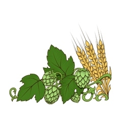 Hops and barley ornament vector