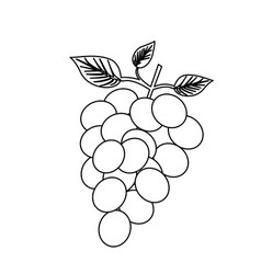 Monochrome silhouette of bunch of grapes vector