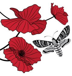 Moth and red poppy vector