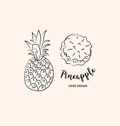 pineapple fruit graphic drawing sketch of vector image