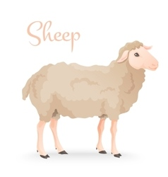 realistic cute sheep standing on gras with farm vector image