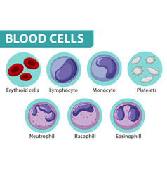 type blood cells vector image