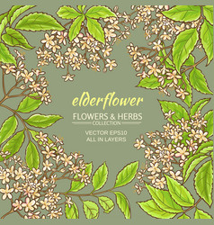 elderflower frame vector image vector image