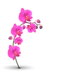 naturalistic beautiful colorful pink orchid on vector image