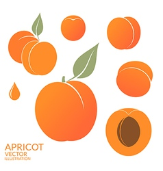 Apricot Set vector image