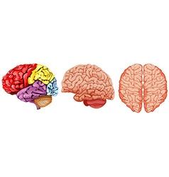 Different diagram of human brain vector