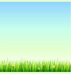 Green natural grass border with white daisies vector