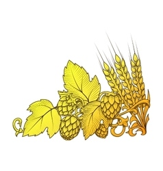 Hops and barley ornament vector image
