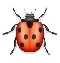 ladybug insect isolated vector image