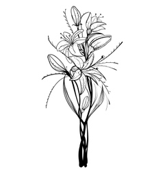 Lily Flowers Outline vector image vector image