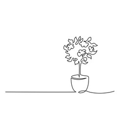 blooming tree in pot continuous one line drawing vector image