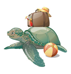 cartoon sea turtle sweet turtle baby vector image