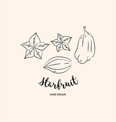 starfruit graphic drawing exotic fruit sketch of vector image