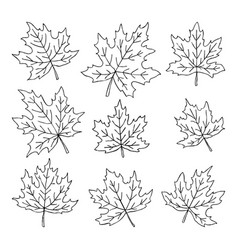 beautiful set of doodle maple leaves isolated vector image
