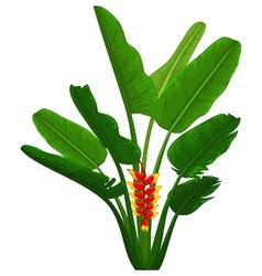 bird of paradise plant cartoon vector image