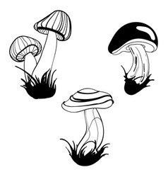 set of mushrooms collection of stylized vector image vector image