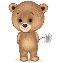 Cute little bear isolated on white background vector image vector image