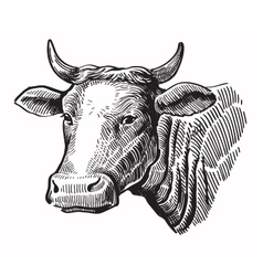 Black cow vector