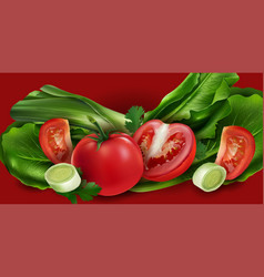 tomatoes onions and lettuce vector image