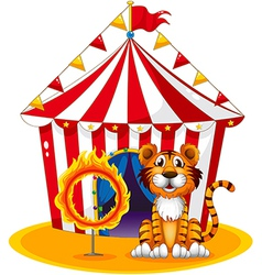 A circus tent at the back of the tiger and the vector image