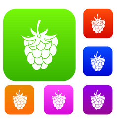 raspberry or blackberry set color collection vector image
