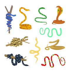 cartoon pictures of different snakes and reptiles vector image vector image