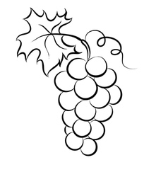 monochrome grapes logo vector image