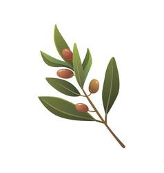 olive tree branch in cartoon vector image