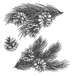 Pine cones on branch collection hand drawn vector