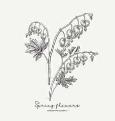 hand drawn dicentra heartshaped spring flowers vector image
