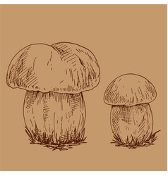hand drawn outline of edible mushrooms vector image