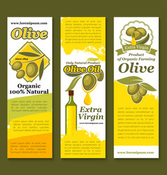 banners of olives and olive oil vector image