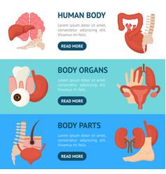 cartoon human internal organs banner horizontal vector image