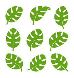 eco green color south tropical monstera leaf logo vector image