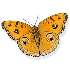 Peacock pansy butterfly vector