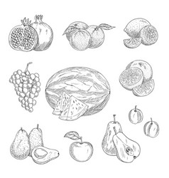 Sketch icons of exotic and garden fruits vector