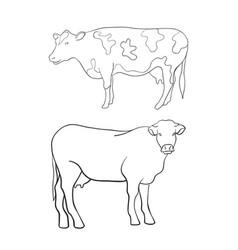 line art animal cow vector image