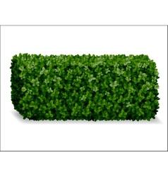 boxwood decorative fence vector image