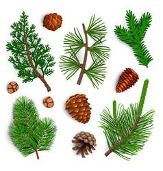 Pine needle cones set vector