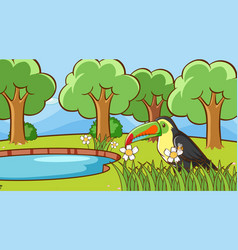scene with toucan bird in park vector image