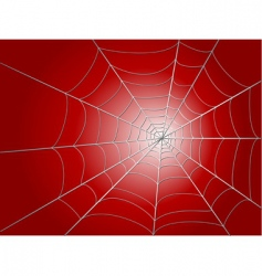 spider wed vector image