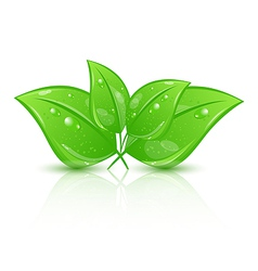 Green eco leaves isolated on white background vector image vector image