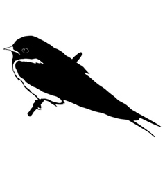 black silhouette of swallow vector image