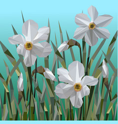 Daffodil flowers isolated vector