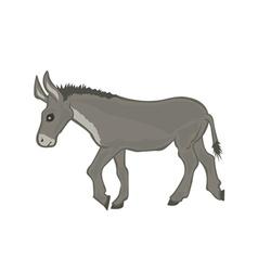 Donkey cartoon vector