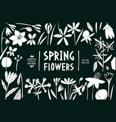 spring flowers design template scandinavian style vector image