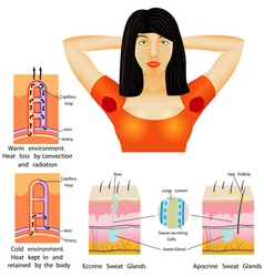 Armpit sweat vector