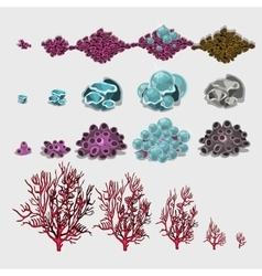 Big set of corals and underwater plants for design vector image